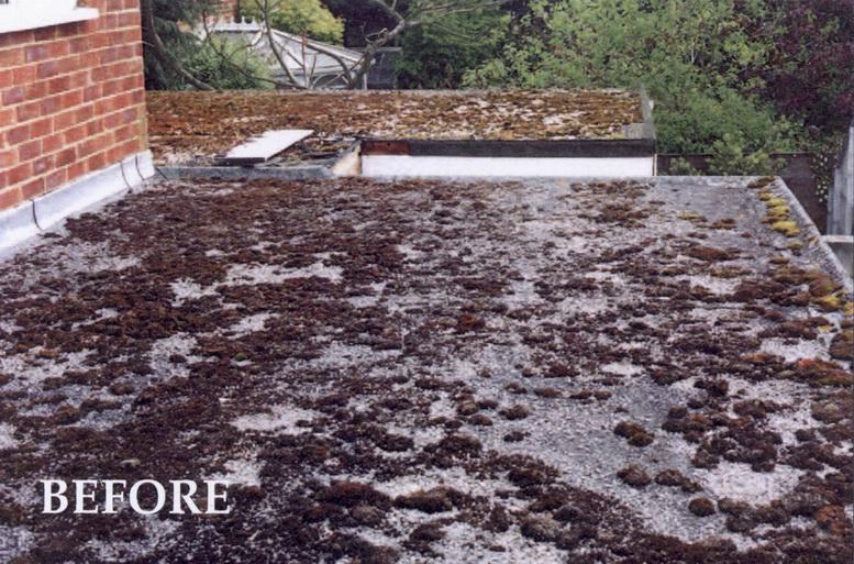 Zinc strip roof fungus australia